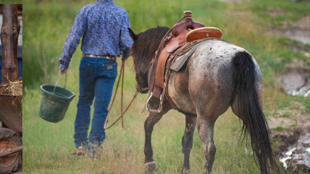 Picture of a man leading his Appaloosa horse while carrying a feed bucket.