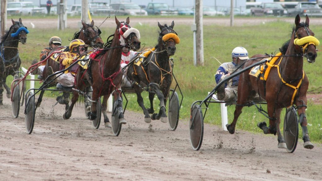 Picture of a harness race.