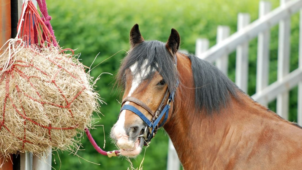Picture of a horse eating from a hay bag, i.e. slow feeder.