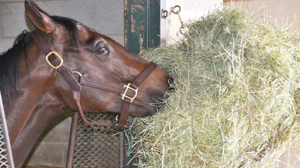 Picture of a horse eating hay.