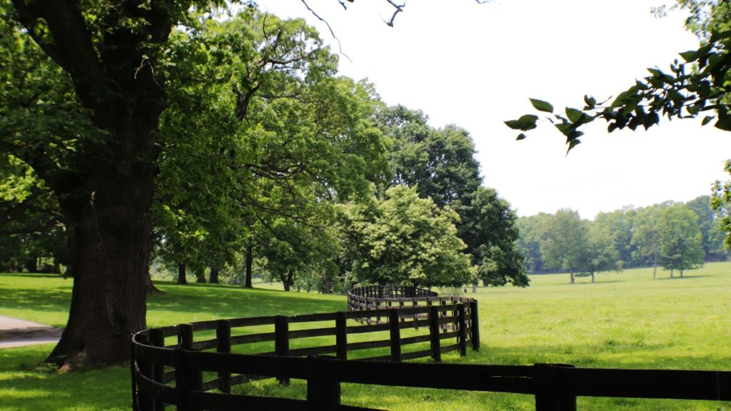 Picture of a horse pasture,