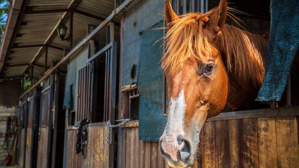 Picture of a horse in a shedrow barn,