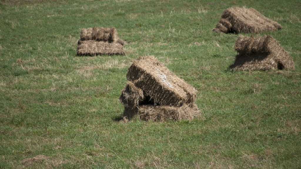 Picture of square bales of hay in a field.