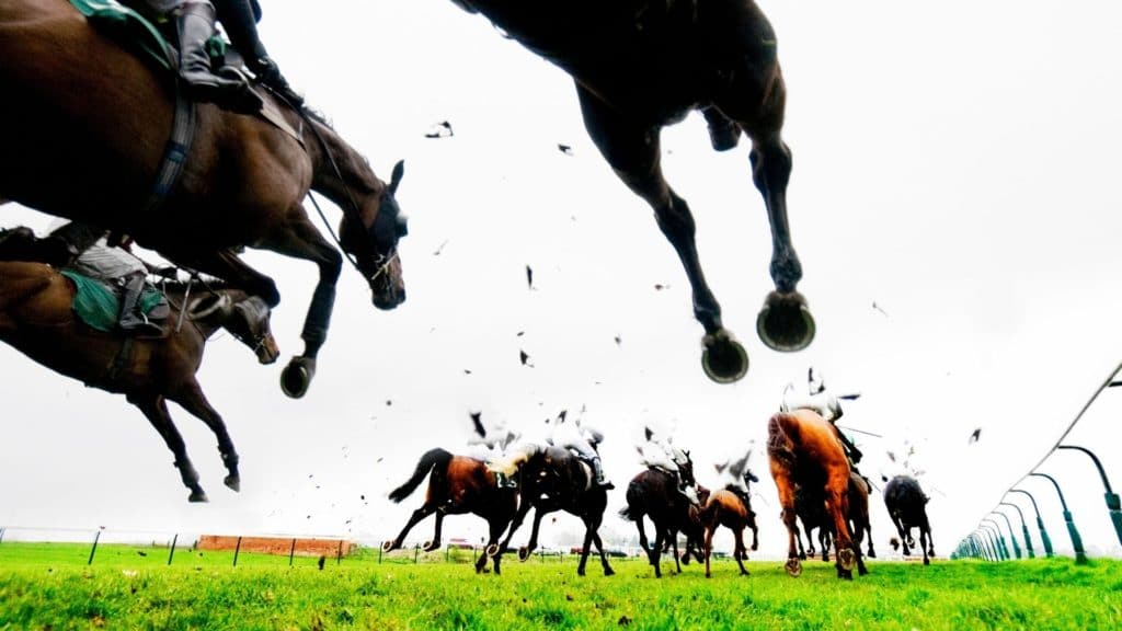 Picture of horses in a steeplechase race.