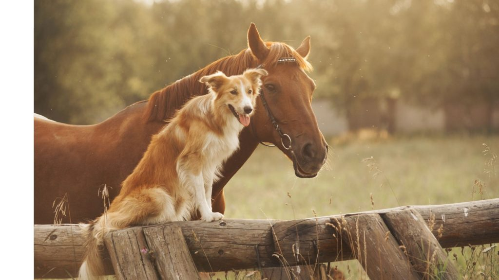 Picture of a dog sitting next to a horse,
