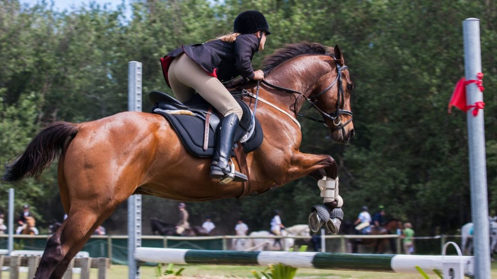 Picture of an equestrian jumping her horse,