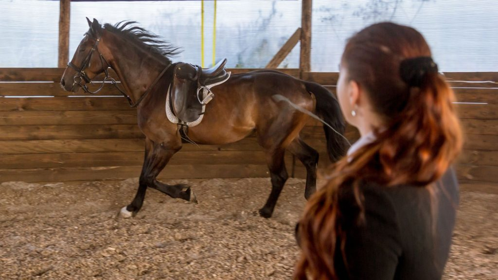 Picture of a teenager working with a horse on a lunge line.