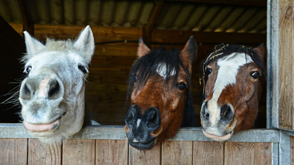 picture of three horses with their heads together.