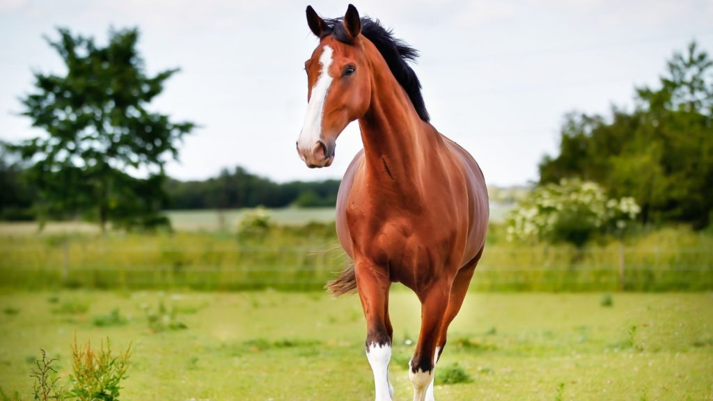 Picture of a horse in a field,