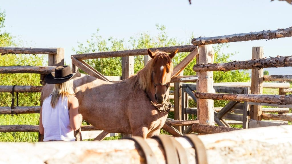 Picture of a woman working with a skittish horse,