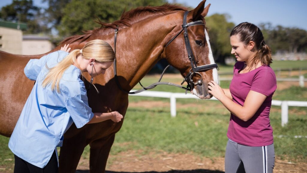 Picture of a vet checking a horse.