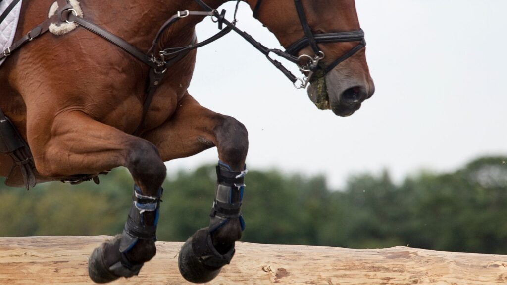 Picture of a horse jumping with bell boots.