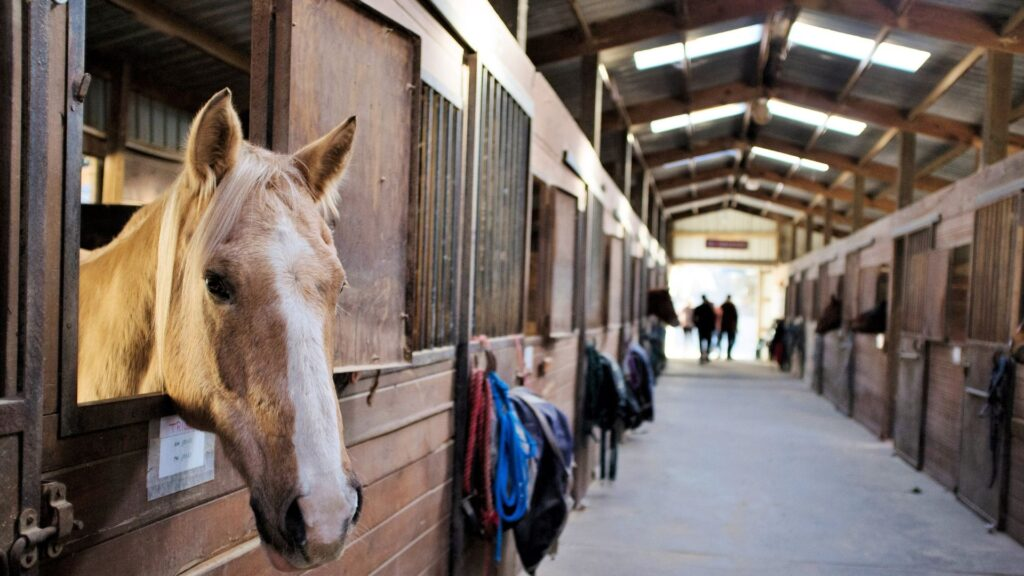 Picture of a horse barn aisle with a horse in a stall.