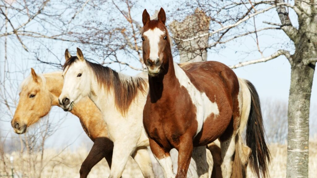 Picture of three different horse breeds.