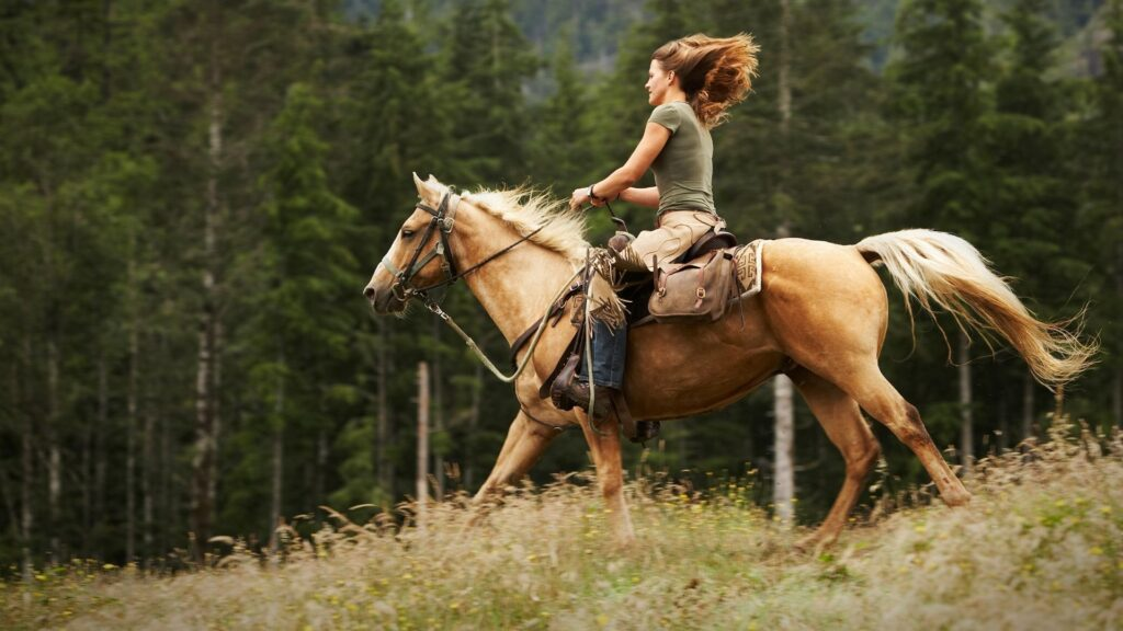 Picture of a woman horse riding on a Palomino