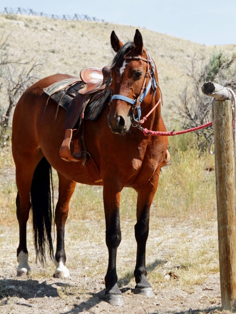 Picture of a saddled horse tied to a hitching post.