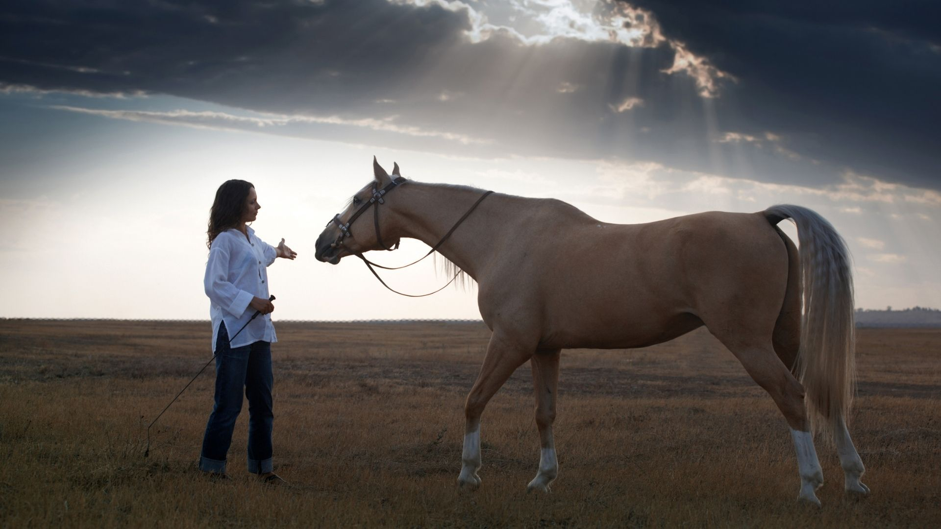 Picture of a woman working with a horse.