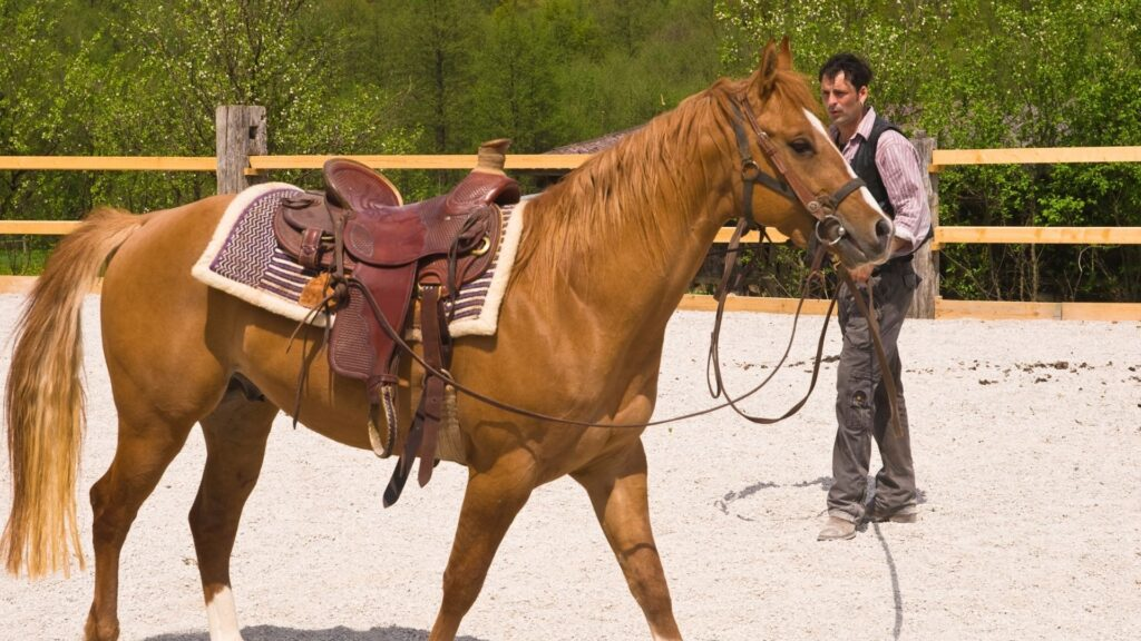 Picture of a man training a horse.
