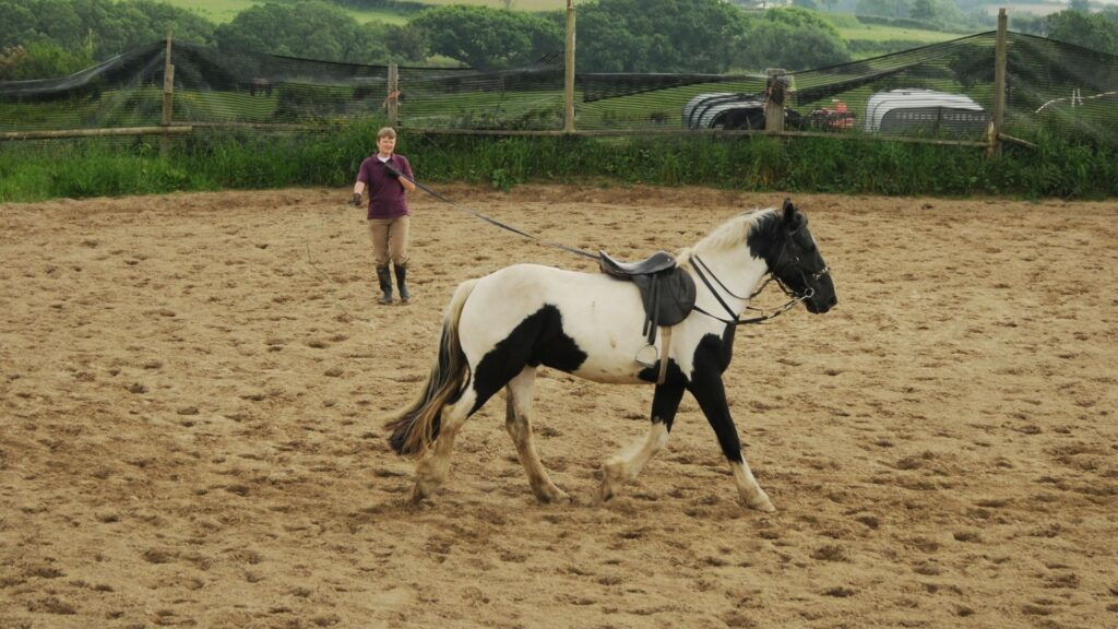 Picture of a person working a horse on a lunge line.