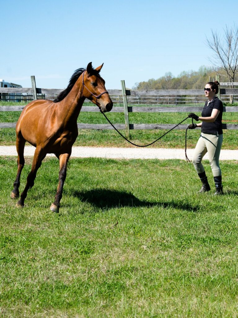 Picture of a woman lunging a horse.
