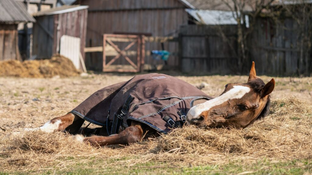 Picture of an old sick horse that may be dying.