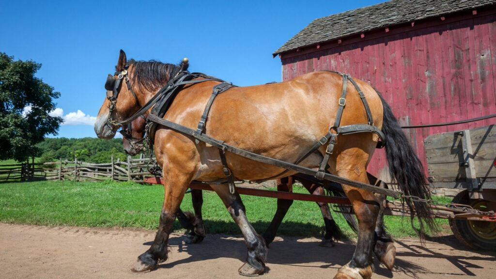 Picture of strong horses pulling a wagon,