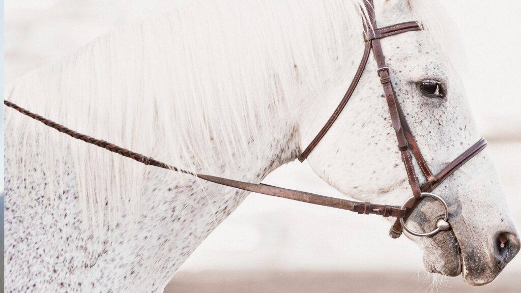 Picture of reins attached to a bit of a grey horse.