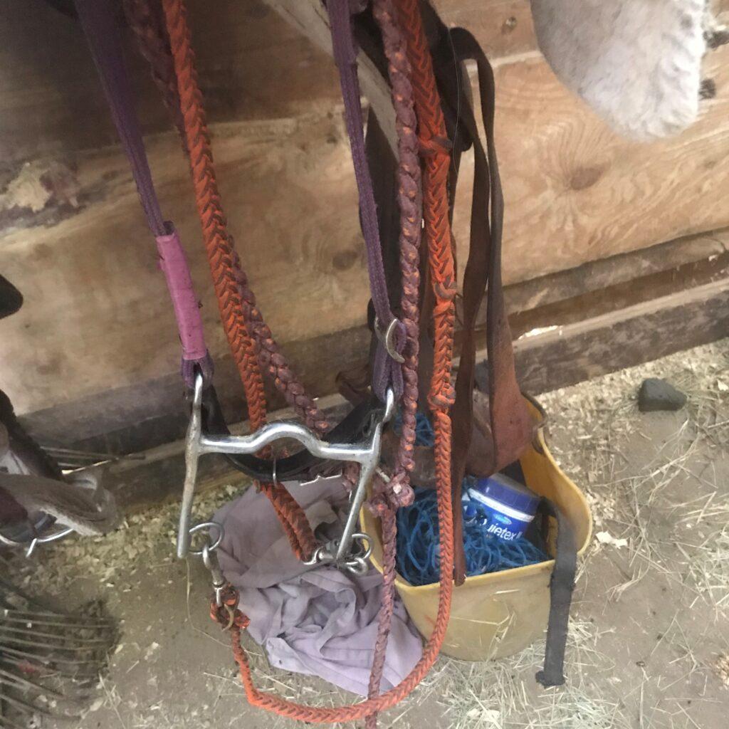 Pony horse western bridle