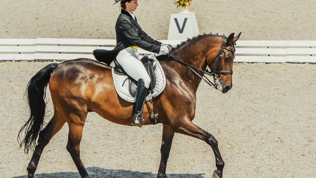 Picture of dressage competition.