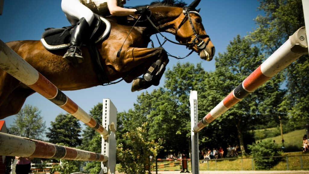 Picture of a horse leaping over an obstacle in a showjumping competition.