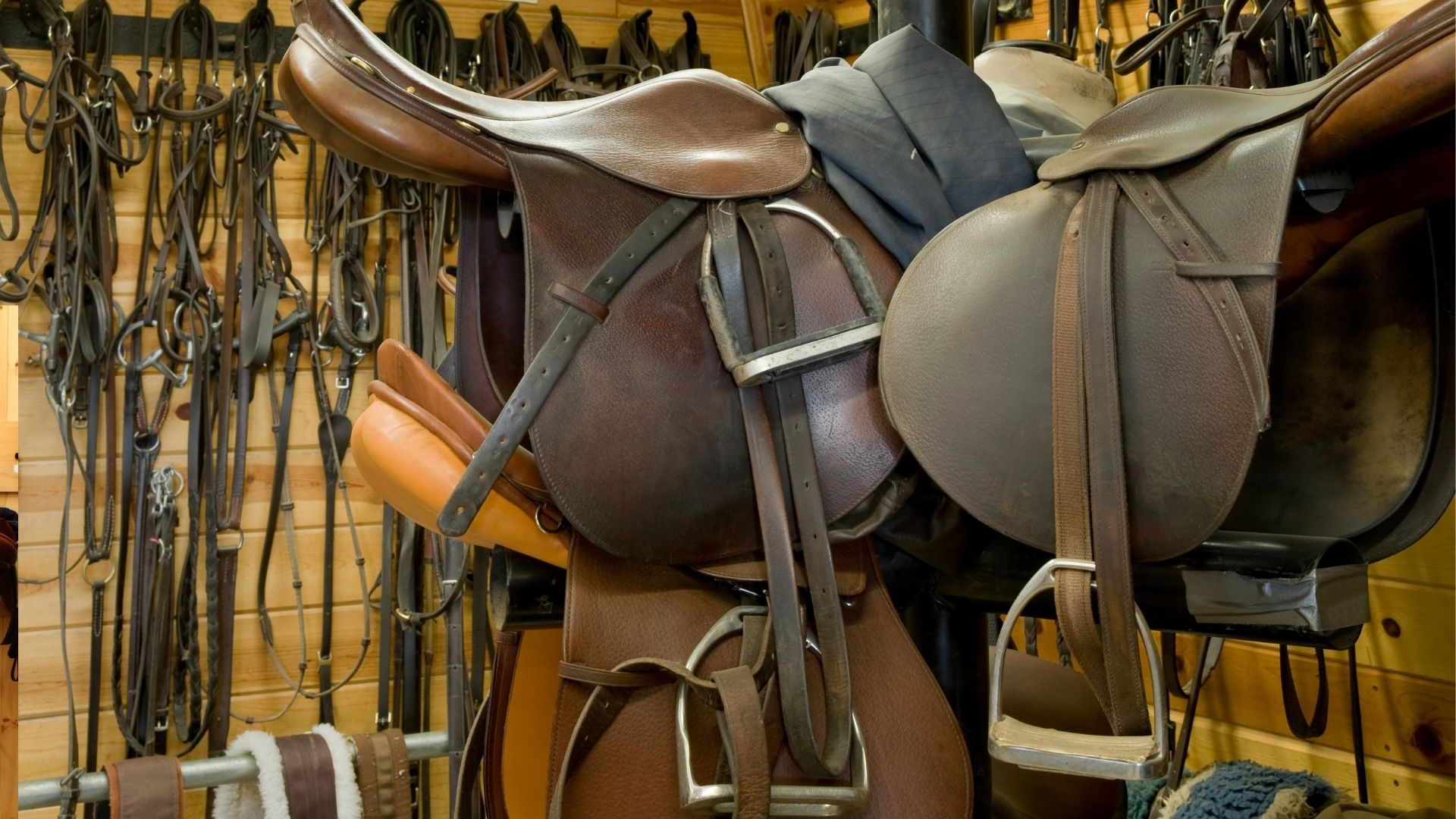 Picture of horse tack.