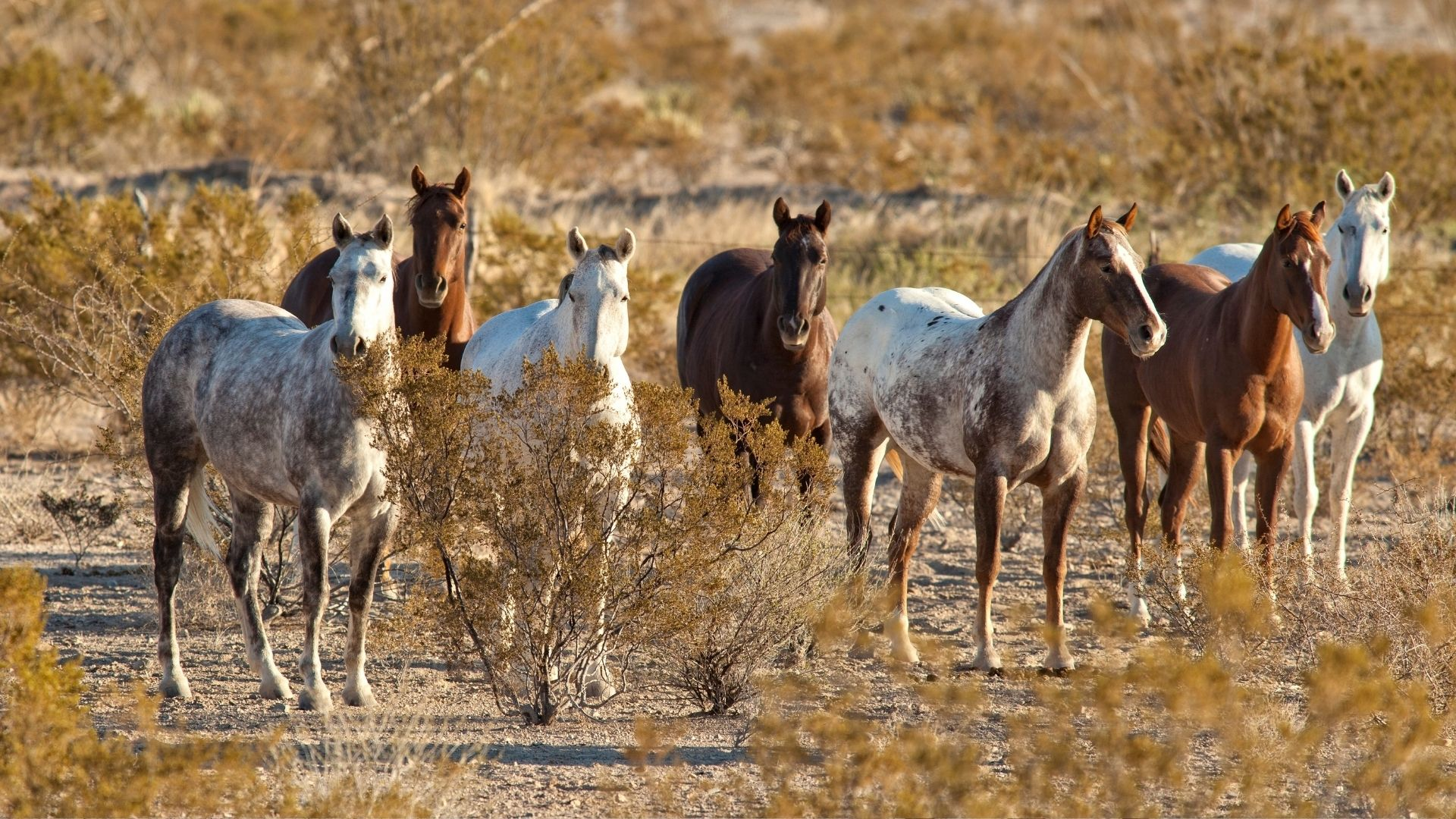 Picture of mustangs.