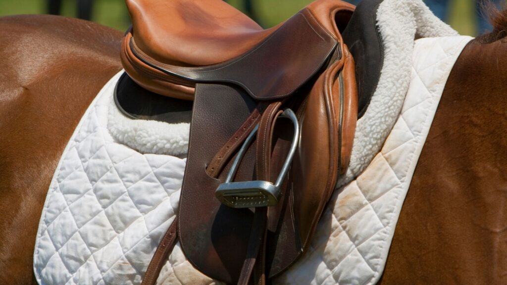 Picture of a saddle and saddle pad.