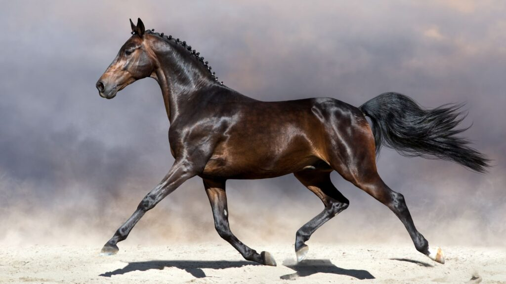 Picture of a bay horse.