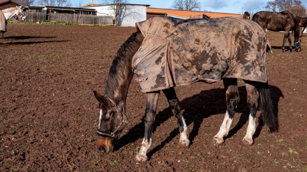 Picture of a horse wearing a blanket.