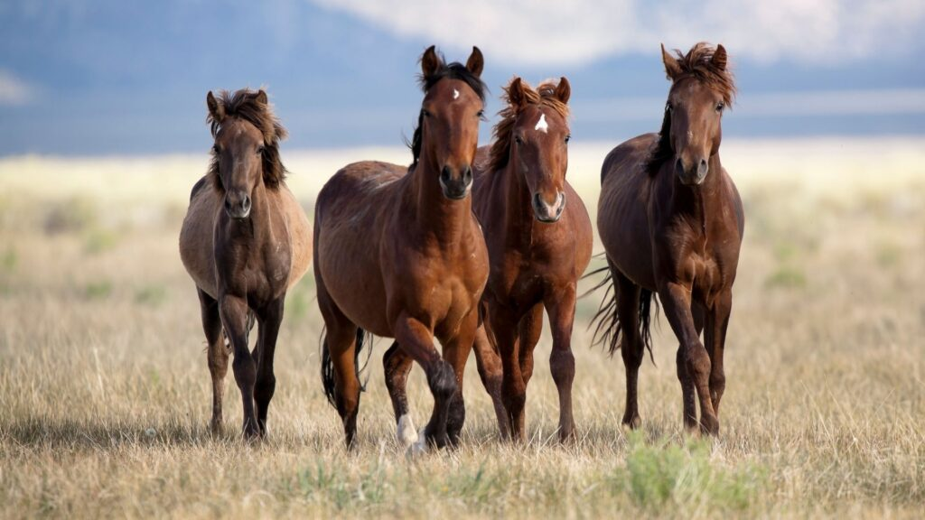 Picture of four horses on the range.
