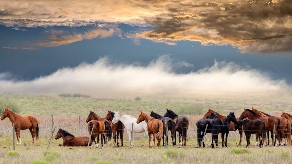 Picture of a herd of horses.