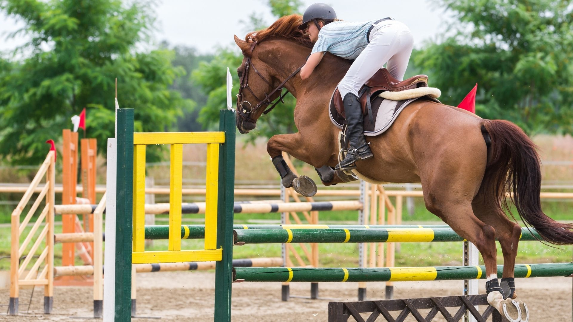 Picture of a horse jumping a yellow and green obstacle.