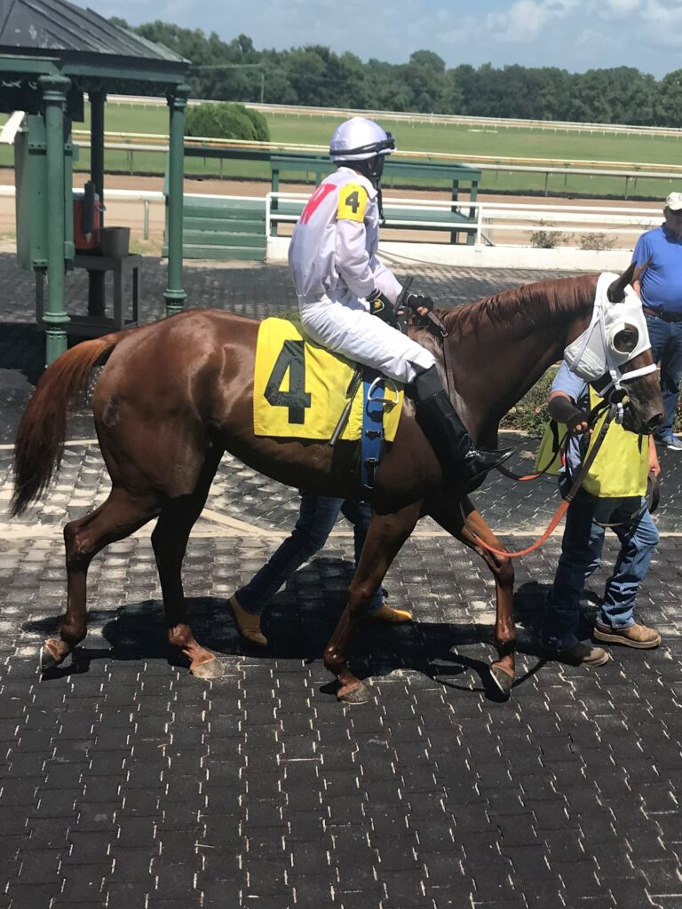 Picture of a racehorse at La. Downs Race track.