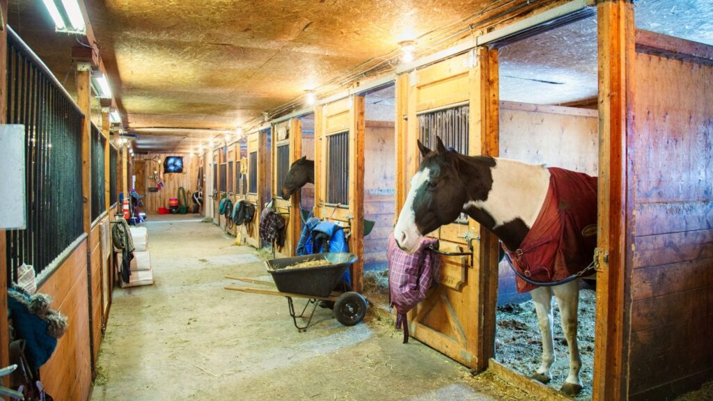 Picture of horses standing in their stalls