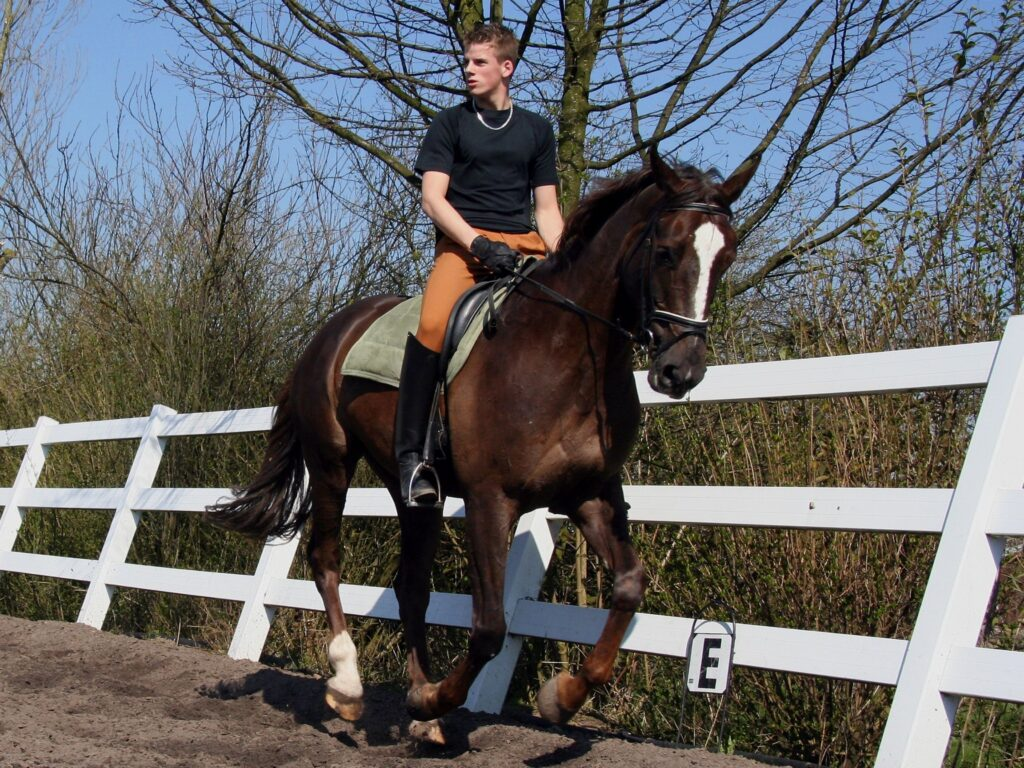 Picture of a horse traveling in a canter.