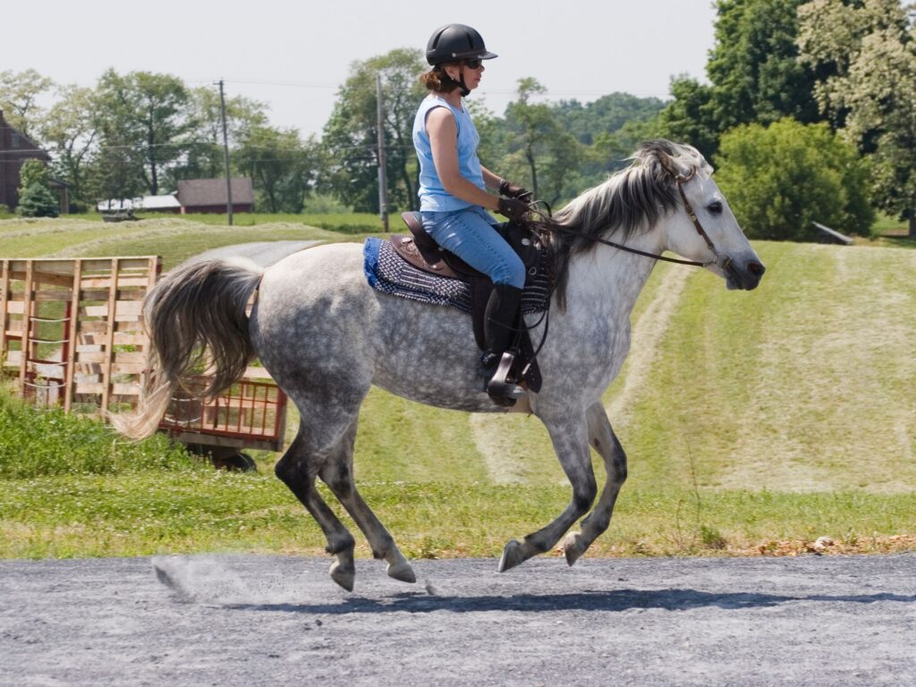 Picture of a rider cantering their horse.