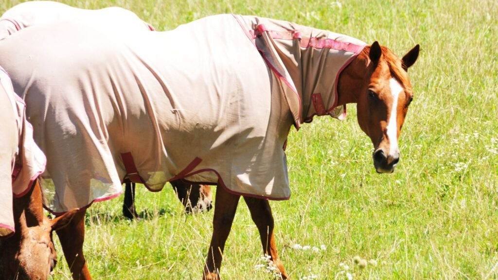 horse wearing a cooling sheet in the pasture.