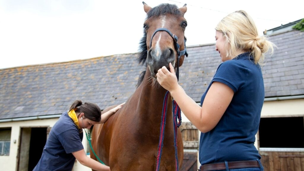 Vets listening to a horse heart