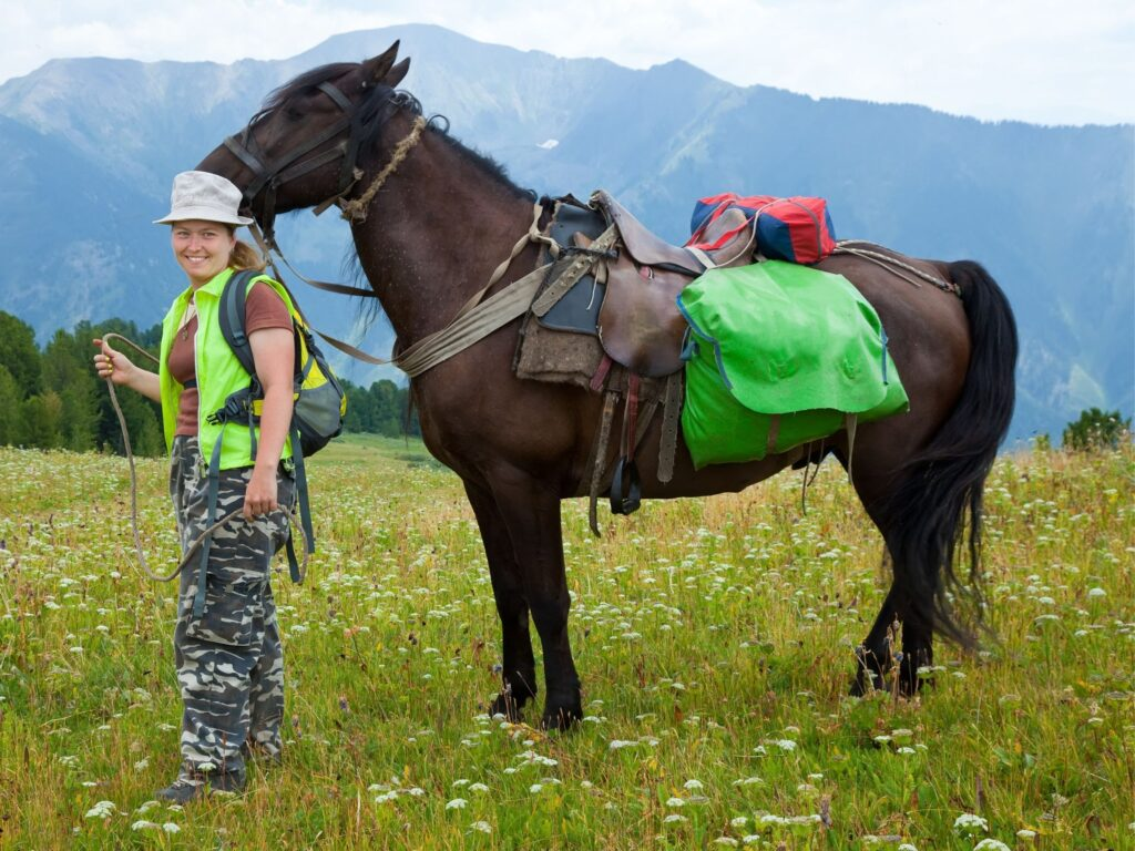 Picture of a horse with saddlebags.