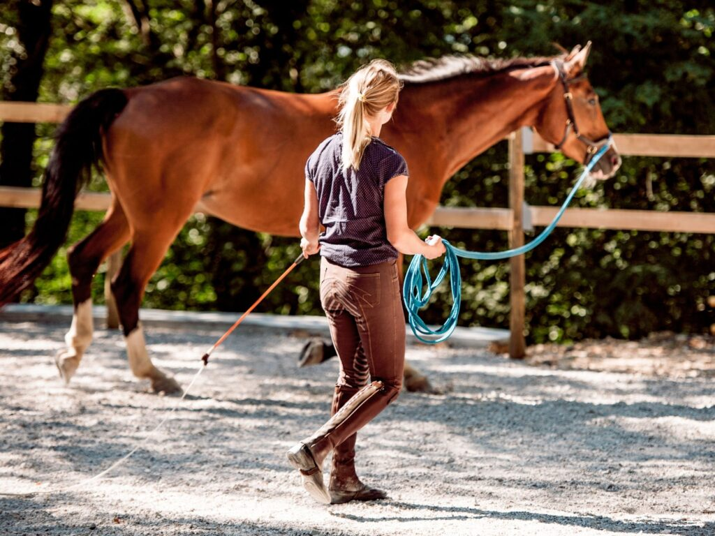 Picture of an equestrian lunging a horse.