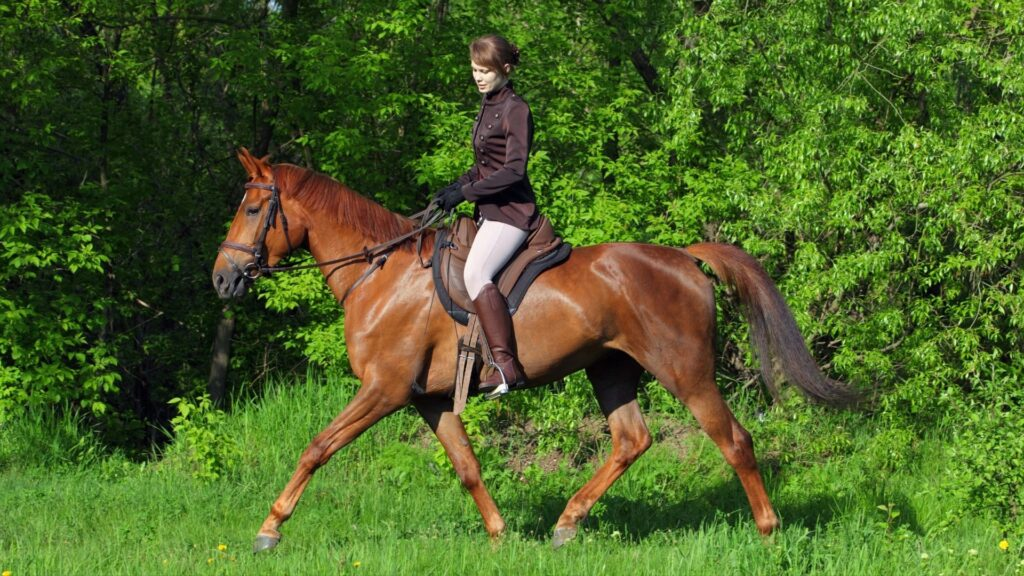 Picture of a woman in riding breeches,