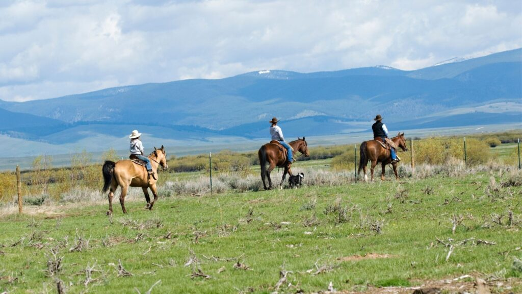 Picture of a trail riding horses.  Average horse costs for these types are typically more reasonable.